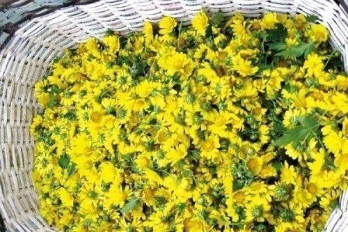 Hoa cúc không chỉ có tác dụng chăm sóc da mà còn thanh lọc cơ thể